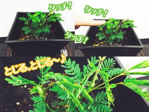 1605植物植え替え